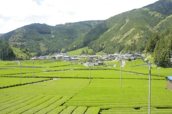 【悲報】ポケモンGO田舎で遊べない